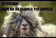 mucche cavalli asini pecore capre