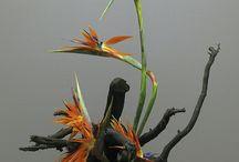 Ikebana and other flower arrangemnets