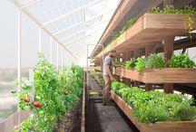 Green urban Architecture