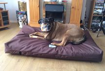 Large Dog Beds / Berkeley dog beds make a range of beds suitable for large dog breeds. Our Waterproof Orthopedic XL Dog Bed Mattress with Pocket Springs measures 140 x 90 x 20 cm and weighs c. 14 kg.