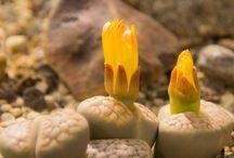 tarlasera İlginç Bitkiler- Interesting Plants / Okumak için mola verin. tarlasera