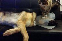 Cat vs Dog  - Dog vs Cat