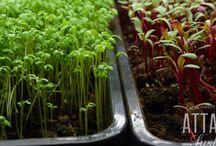 Gardening! / Organic gardening