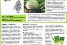 3. Bylinky, Rostliny, Koření