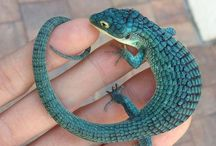 reptiles being cool af