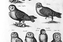 OWLS for: Night of Owls