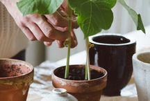 Planten in huis  |  Plants