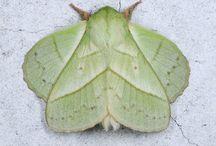 AMAZING MOTHS / the beauty of moths