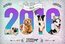 Perros y más perros