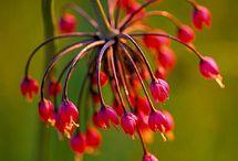 Flowers ~ Virágok