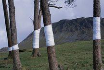 Art in nature / land art