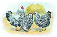 The Barnyard / Chickens and other lovely things.  / by Trish Givens