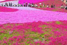 Japan Trip / by Amanda Thomas