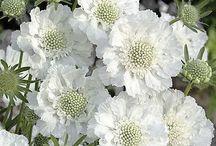 kwiaty dla mnie