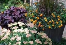 Perennial Gardens / Flowers