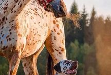 ❤️Horses and dogs❤️