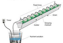 hydraponics
