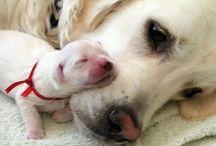 Too cute! / Animals