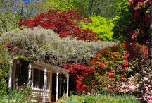 Australian Spring Gardens / by Black Diamond Images