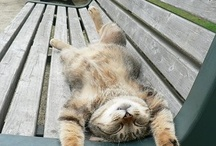 rest on bench
