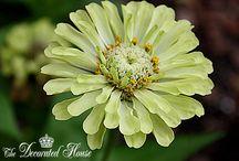 wildflowers cutting / varietà di fiori spontanei da taglio ideali per le composizioni