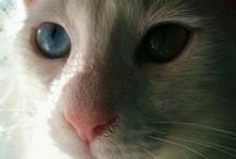 Kedi _ Cat