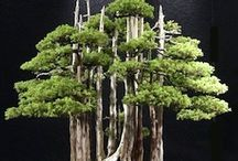 Forest or Group Bonsai (YOSE-UYE) / Forest or Group Bonsai specimens. This style is known as Yose-uye. Learn more about the common styles of bonsai here: http://www.dallasbonsai.com/types-of-bonsai