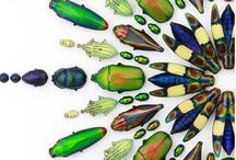 Christopher Marley: Insect Art