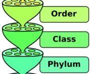 Homeschool | Biology