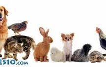 animalitos / animales tiernos y adorableas