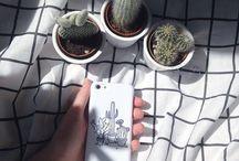 Cactus&Succulents