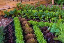огород - это не только вкусно, но  красиво