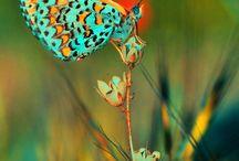 Flutterbys / by Krista Helms