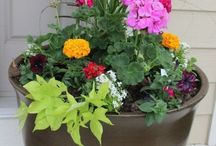 How to plant containr