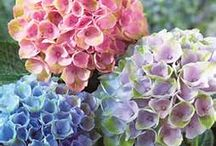 Home decor and beauitful flowers