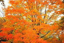 L'automne aux Poteries D'ALBI