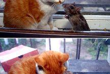 A cats life.