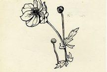 Dibujos de Sylvia Plath