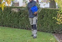 Rasen pflege