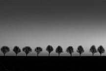 BILDER - Träd
