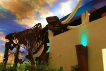 Fantastic Florida Places / by On the Go in MCO