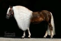 můj koník má dlouhý vlasy