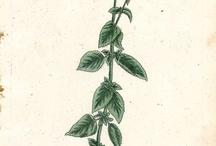herbarium  / by Mar Saints