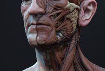 Анатомия рисунка