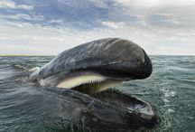 Christopher Swann normally takes Amazing photographs of whales and dolphins.