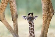 Animalitos hermosos!