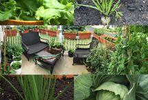 Back patio gardening