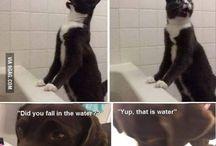 • Cat vs dog •