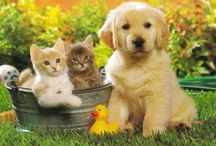 Animales / Son los más lindos animales