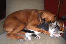 Boxers <3 / by Jessica Wolfe